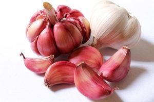 Allicin er en naturlig del af hvidløgets 'immunforsvar'