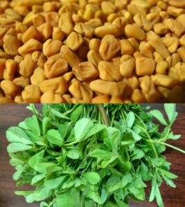 Bukkehornsfrø (øverst) og bukkehornsblade har hver deres anvendelse inden for naturmedicinen