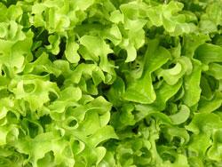 Salater kan piftes op med appelsinblomstvand